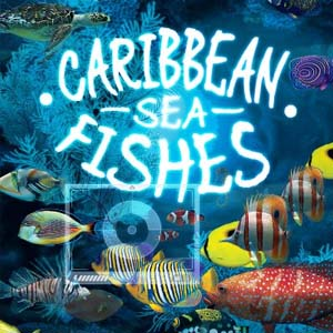 Caribbean Sea Fishes Digital Download Price Comparison