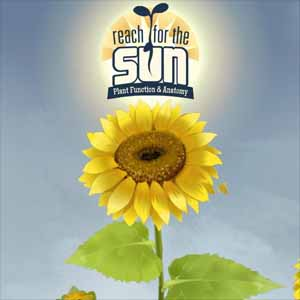 Reach for the Sun Digital Download Price Comparison