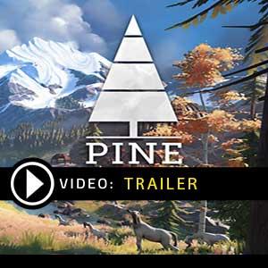 Pine Digital Download Price Comparison